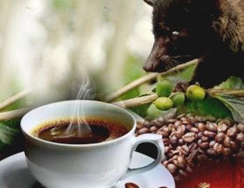 кофе лювак 1