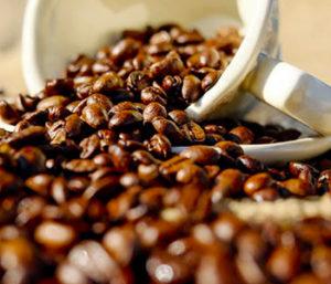 coffee arabica -1